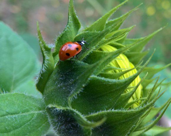 Neue Studie bestätigt Insektensterben