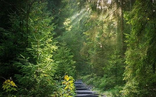 TIPP 07.08.2020: Waldbaden