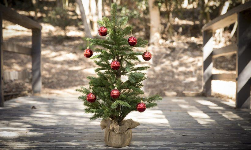 Leise rieseln die Nadeln – Alternativen zum Wegwerf-Weihnachtsbaum